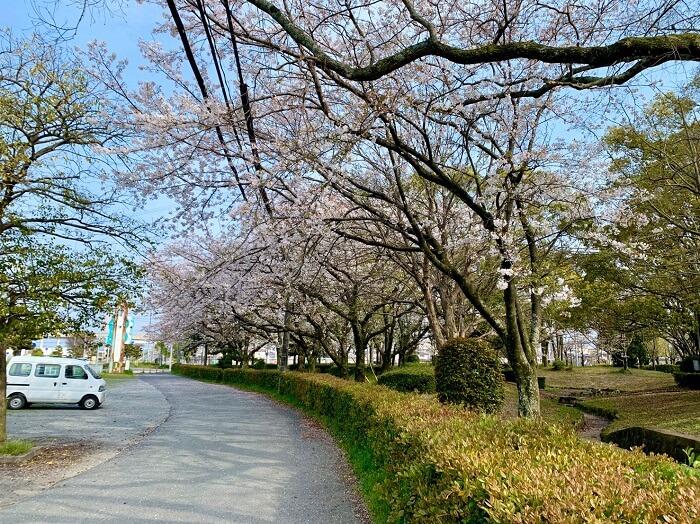 【花見スポット】窓ヶ原公園(筑後市)の桜をご紹介