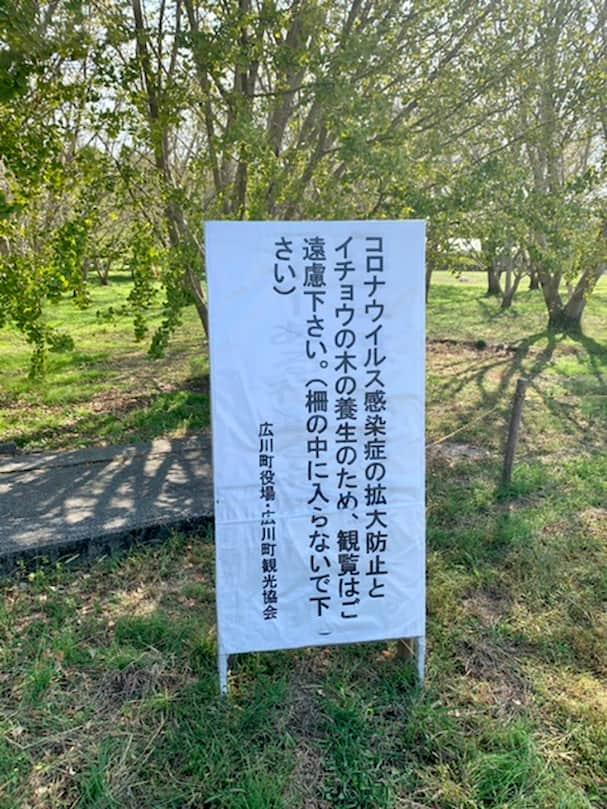 今年の「太原のイチョウ観覧」は中止されます【広川町】