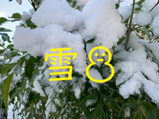 今朝は絶好の雪だるま日和だったから作ってみたものの……