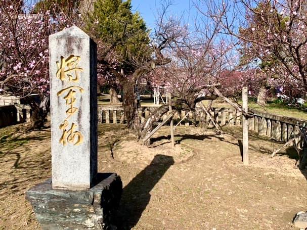 宮ノ陣神社の樹齢600年以上になる将軍梅を観梅して来ました!【久留米市】